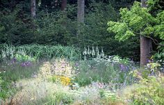 Tall miscanthus and veronicastrum lead the eye up to the trees in the background. In the front molinia Echinacea and liastris
