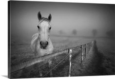 Portrait horse standing at fence with fog.