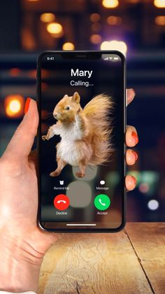 Ringtones for iPhone! Iphone Wallpaper Video, Wallpaper App, Animal Wallpaper, Galaxy Wallpaper, Stupid Funny Memes, Funny Animal Memes, Animal Quotes, Funny Relatable Memes, Hilarious