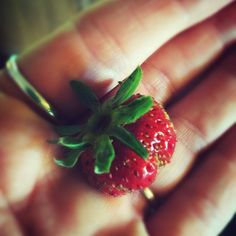 First strawberry I've ever grown! So tiny! And soooo delicious! #hawaii life #garden #green thumb #yum #mauilife #maui