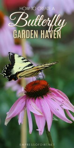 Turn your garden into a butterfly have with these tips. It's not just about plants but providing a safe, secure habitat. #butterflies #naturalhabitat #gardening #backyardgarden #pollinators #gardentips #empressofdirt