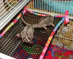 DIY Mesh Sugar Glider Shelf - petdiys.com