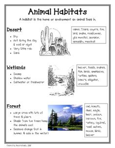 This two page information sheet gives facts on the following habitats; desert, wetlands, forest, ocean, arctic, grassland,