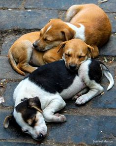 cuties Mixed Dog Breeds Puppies Dogs Puppy Dog