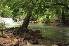 tree in stream - Google Search