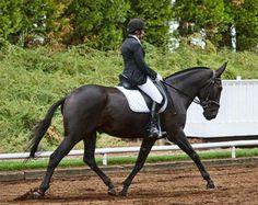 Dressage mule that's 100x fancier than my horse...