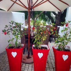 Die See Kat Restaurant - Paternoster - West Coast - South Africa. West Coast, South Africa, Planter Pots, Restaurant, Lifestyle, Diner Restaurant, Restaurants, Dining