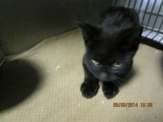 PANTHER has been rescued by SUZY'S ZOO SANCTUARY! Shelters, Panther, Cats, Animals, Gatos, Animales, Animaux, Animal Shelters, Panthers