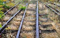 Overgrown Railroad Tracks | last remaining unrenovated tracks of the West Side Elevated Railway ...