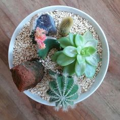 Cactus in the bowl