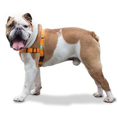 Professional Quality No Pull Dog Harness by GoPets in Safety Orange w Reflective Stitching Includes Waste Bag Attachment for Medium Large XL Dogs Medium -- Check this awesome product by going to the link at the image.