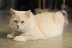 My cat by Woradon Narasettekun, via 500px