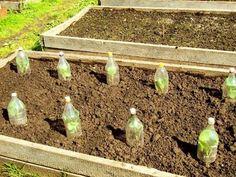 Slik lager du et minidrivhus - viivilla. Inside Garden, Terraria, Go Green, Gardening Tips, Sustainability, Seeds, Exterior, Plants, Outdoors