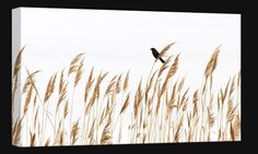 Male Red winged Blackbird  - Geoff Coe Photography on Canvas  Order here: http://www.fineartgalleryoncanvas.com/Red-winged-Blackbird-photography-on-canvas-p/ji_gc_0012.htm