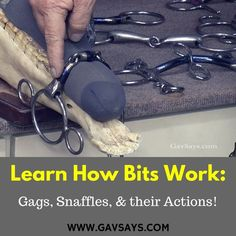 www.gavsays.com: Choosing the right bit for your horse is often a challenge. So equip yourself with an understanding of how bits work - and the different action of each bit, to make choosing the right bit easier...