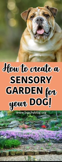 Many of us spend our days trundling around our gardens with our pooches in tow! Read more about how to create a SENSORY GARDEN for you and your dog with specific plants all safe for them to eat with medicinal benefits and ideas and accessories to mak Dog Health Tips, Dog Health Care, Dog Friendly Garden, Diy Pet, Dog Enrichment, Dog Playground, Playground Ideas, Dog Garden, Sensory Garden