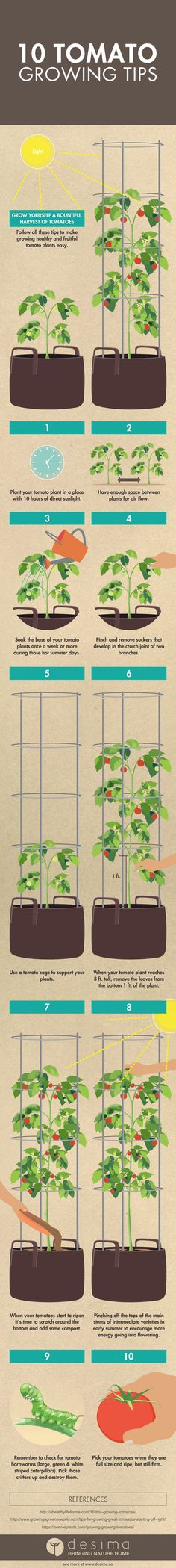 Follow all these tips to make growing healthy and fruitful tomato plants  easy.    1. Plant your tomato plant in a place with 10 hours of direct sunlight.  2. Have enough space between plants for air flow.  3. Soak the base of your tomato plants once a week or more during those hot  summer days.  4. Pinch and remove suckers that develop in the crotch joint of two  branches.  5. Use a tomato cage to support your plants.  6. When your tomato plant reaches 3 ft. tall, remove the leaves from…