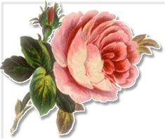 Lots of free clipart for those that may try decoupage  Free Rose Clipart - Public Domain Flower clip art, images and graphics