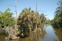 Bayou Scenery | Louisiana Bayou Scenery 3411783164_6786f0a164_o.jpg