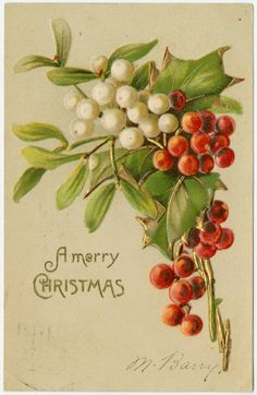 Image ID: 1585460 #1 Mid-Manhattan Library / Picture Collection A merry Christmas.  [[Sprigs of mistletoe and holly]] (190-)  Gold metallic accents.