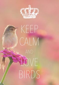 keep calm and love birds / created with Keep Calm and Carry On for iOS #keepcalm #birds