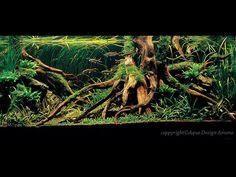Rainforest Inspired (Tree Roots Aquascape)
