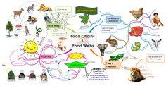 Food Chains Food Webs Science Geek, Science Fair, Science For Kids, Science Ideas, Elementary Science, Teaching Science, Teaching Resources, Teaching Ideas, Food Webs