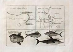 """Little Kaskais Land. Part of the Kingdom of Congo. A Dorado […]"". Engraving ca.25x35cm; Johannes Kip (1653 in Amsterdam - 1722 in London). Henry Lintot & John Osborn London 1746."
