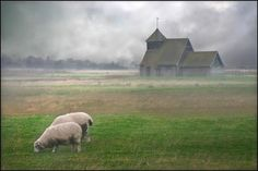 Romney Marsh in the rain. Photo by Colin Carron. Romney Marsh, Kent Coast, Kent England, English Countryside, East Sussex, Abandoned Places, Great Britain, Beautiful Landscapes, Travel Inspiration