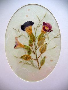 Pressed Flower Art - Bloom, Bake & Create