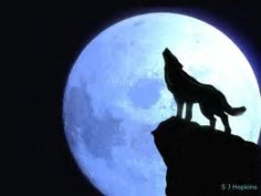 Image result for wolf silhouette paintings on canvas