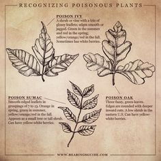 Identifying Poisonous plants