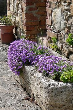 Stone troughs are great planters.if you can not find a natural stone trough you can make one with hypertufa. Trough Planters, Stone Planters, Concrete Planters, Garden Planters, Wall Planters, Succulent Planters, Balcony Garden, Planter Boxes, Succulents Garden