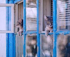 kitties and old blue window