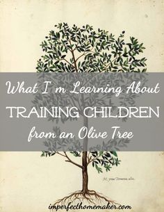 Christian Motherhood - What I'm Learning About Training Children from an Olive Tree