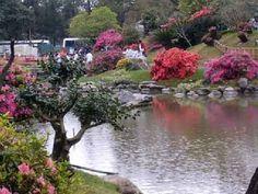 Cuando tenemos un jardín con dimensiones no muy grandes, son este tipo de árbol de tamaño medio o pequeño lo que mejor quedara para nuestro jardín pequeño.