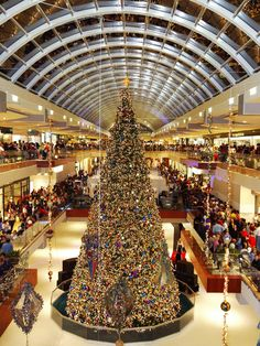 The big tree in the middle of the ice skating rink at The Galleria - Houston, Texas.