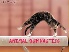 """У нашего нового партнера - Padede Studio есть очень интересное занятие - Animal Gymnastics. Настоящих """"animals""""  вы на занятии не встретите, зато последовательно проработаете все мышцы, связки и сухожилия с помощью имитации движений животных."""