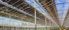 THM - Tecnologías de la Horticultura Mediterránea: La planta de interior admite la instalación de pan...