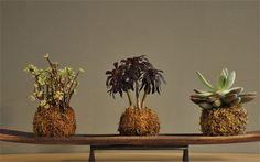 Gardening trends: The rise of 'kokedama' - Telegraph