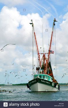 Shrimp Boat Surrounded By Birds Shem Creek Mt Pleasant South ...