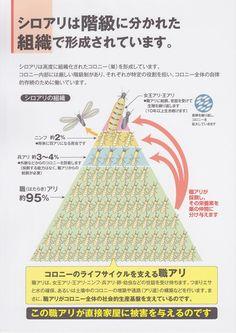 TCマニュアル4.jpg