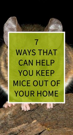 7 Ways That Can Help You Keep Mice out of Your Home United Health Insurance, Health Insurance Plans, Natural Teething Remedies, Natural Sleep Remedies, Health Goals, Health Tips, Health Care, Herbal Remedies