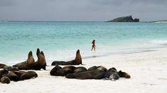 Un puñado de lobos marinos descansa en la playa de La Española, en las Islas Galápagos ecuatorianas.