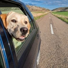 7 Tips for traveling with a Cat or Dog