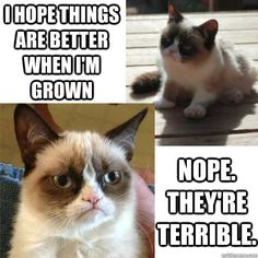 Little Grumpy Cat grows up