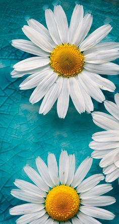#flowers #blue #wallpaper