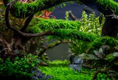 Planted Tank Enchanted forest by Tommy Vestlie - Aquascape Awards