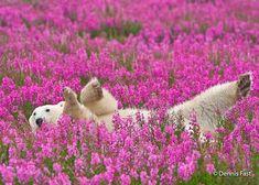 Polar bear tours, wildlife walking safaris and beluga whale enounters. Deep in the heart of Canada's polar bear country. Top Photos, Photos Du, Bear Photos, Beautiful Creatures, Animals Beautiful, Magical Creatures, Photo Ours, Funny Animals, Cute Animals
