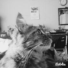 Nikky en blanco y negro mirando mi cuarto